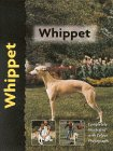 whippet copy