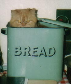 Joe in bread bin